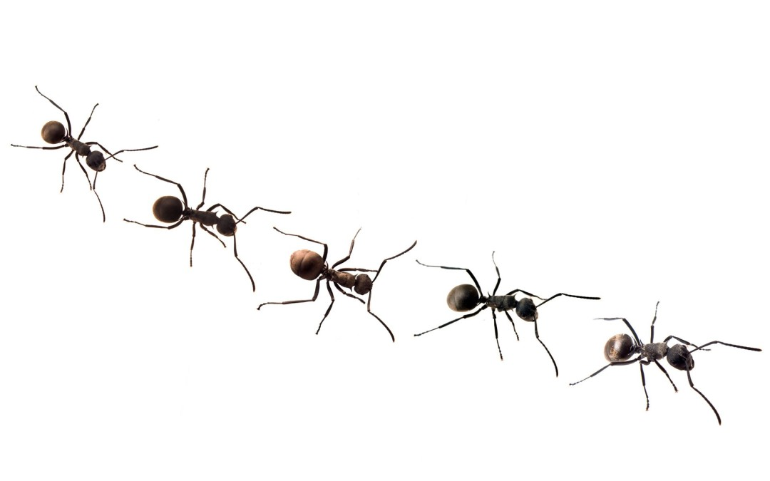Ant Control – Guaranteed To Help!