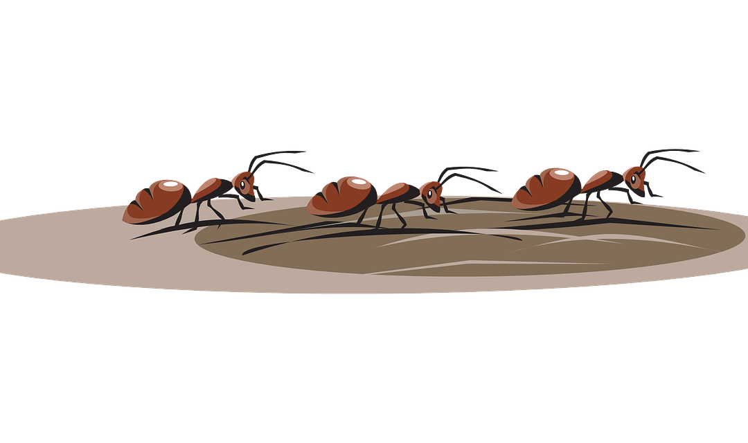 Ant Control – Guaranteed To Help!