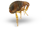 Salem Oregon Pest Control