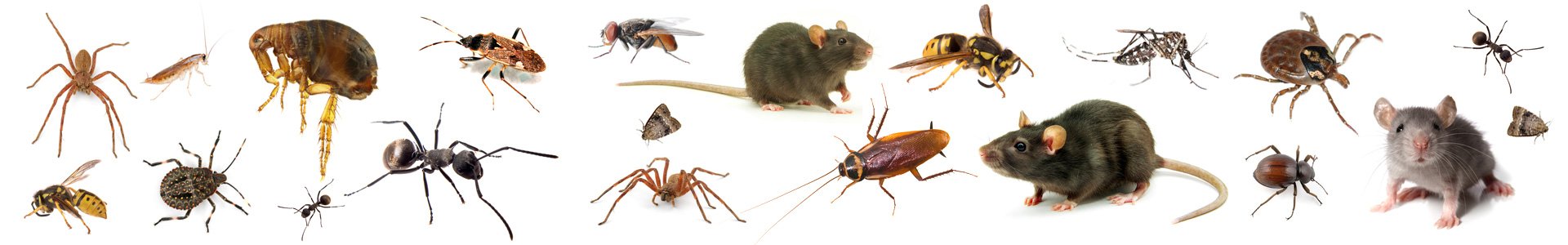 Salem Oregon Pest Control Services Free Estimate Free Consultation